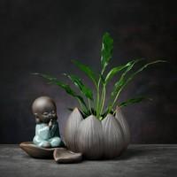 燚窑 绿萝水培植物花瓶 坐莲-轻语小僧(不含植物)